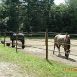 Group turnouts have a water hydrent so your horse has access to fresh water year round